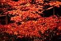 Arashiyama Hanatōro, Nison-in 嵐山花灯路・二尊院紅葉DSCF5203.JPG
