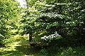 Arboretum RBG.JPG