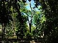 Arbrat jardí botànic de València.JPG