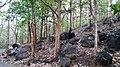 Asurankund Deep Forest - panoramio (6).jpg