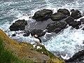 Atlantic Puffin Latrabjarg Iceland 03.jpg