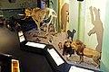 Augsburg Naturmuseum - animals.jpg