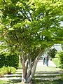 Auteuil-Fern garden 08.JPG
