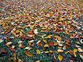 Autumn-21159.jpg