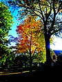 Autumn Colors in Madison - panoramio (5).jpg