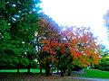 Autumn In Maple Bluff - panoramio (3).jpg