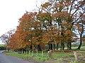 Autumn trees - geograph.org.uk - 1001765.jpg