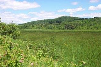 Barton River (Vermont) - Barton River Marsh