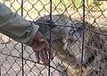 BDF Wildlife Training Area (4903473027).jpg