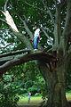 B in a tree.jpg