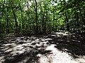 Balade en Forêt de Verrières le 20 août 2017 - 002.jpg