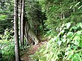 Balsam Mt. Nature Trail-Maggie Valley, NC - panoramio.jpg