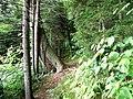 Balsam Mt. Nature Trail-Maggie Valley, NC - panoramio.jpg