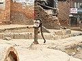 Bandipur P1050046 (3372274879).jpg