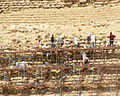 Bauarbeiten an Stufenpyramide.jpg