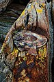Beach closeups Barns Ness, 2014 (15451054182).jpg