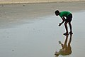 Beachcombing - Tajpur Beach - East Midnapore 2015-05-02 9109.JPG