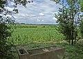 Bean crop - geograph.org.uk - 848668.jpg
