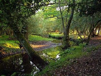Beaulieu River - Image: Beaulieu river upstream of pottern ford