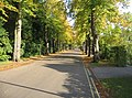 Bentley Road in the autumn - geograph.org.uk - 1030895.jpg