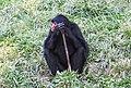 Beto Carrero Zoo - panoramio (8).jpg