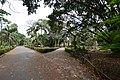 Bicentenary Gate Area - AJC Bose Indian Botanic Garden - Howrah 2018-04-01 2394.JPG