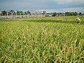 Binangonan,Rizaljf4902 06.JPG