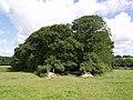 Birches Copse - geograph.org.uk - 494523.jpg