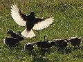 Bird 09361-nevit.jpg