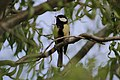 Bird On A Branch (173224175).jpeg