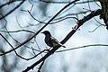 Bird On A Branch (191375891).jpeg