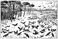 Bird Watching (Selous1901) p279.jpg