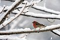 Bird in Snow.jpg