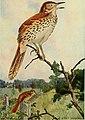 Bird lore (1913) (14768910563).jpg