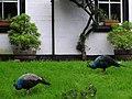 Birds - geograph.org.uk - 250369.jpg
