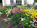 Bitton House flowers, Teignmouth, 22 August 2012.jpg