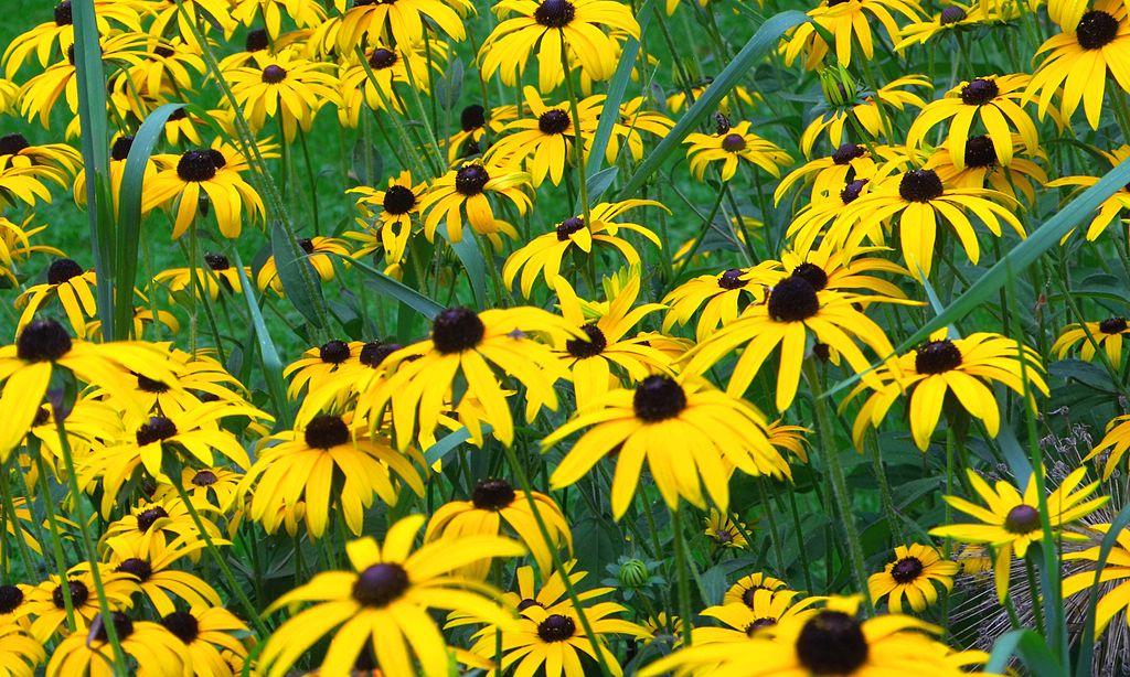 10 grandes plantas que superan el calor del verano -