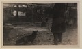 Black foxes owned by Spring Park Black Fox Company, Limited Photo C (HS85-10-26276) original.tif