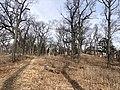 Black oak savannah in High Park, Toronto, Ontario, Canada in March 2021.jpg