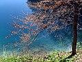 Blick auf den Rand des Blautopfes in Blaubeuren - panoramio.jpg
