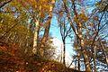 Blick durch den Herbstwald auf die Kreidefelsen.jpg
