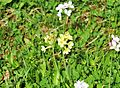 Blume in Wildbad 03.jpg
