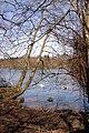 Bolam Lake - geograph.org.uk - 387865.jpg