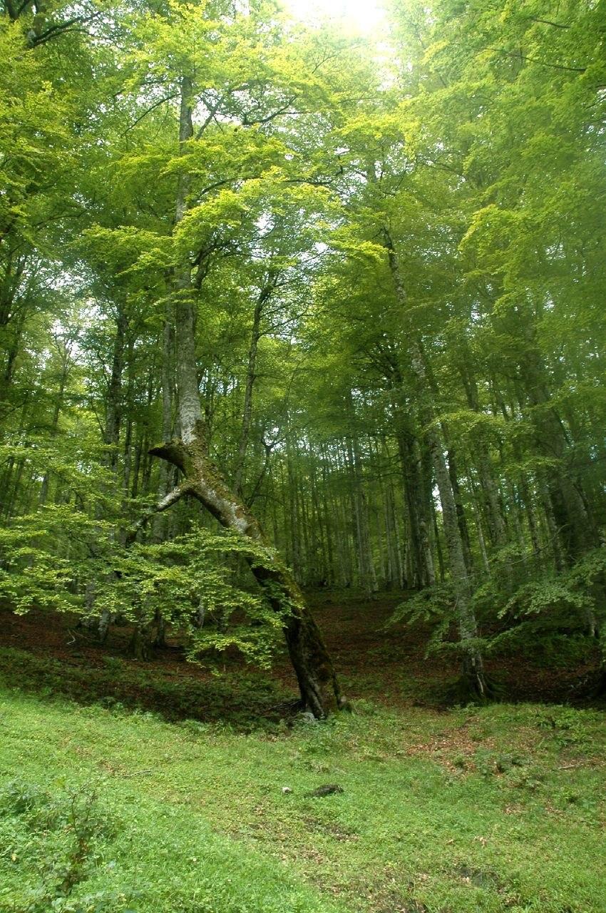 Bosque - Cantabria