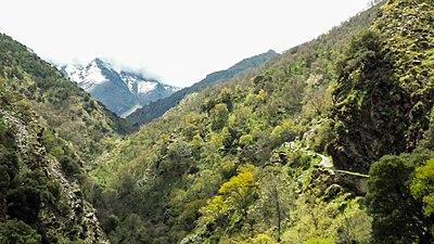 Bosque Vereda de Las Estrellas.jpg
