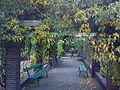 Botanical Garden Poznan xxxx (2).jpg