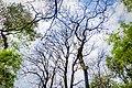 Botanical garden Dhaka Bangladesh.jpg