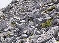 Boulder field on Mullach Coire Mhic Fhearchair - geograph.org.uk - 745292.jpg