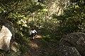 Bowral NSW 2576, Australia - panoramio (109).jpg