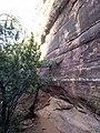 Boynton Canyon Trail, Sedona, Arizona - panoramio (30).jpg